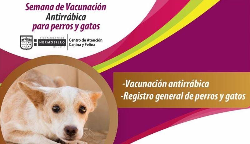 El domingo 11 arranca la Semana Nacional de Vacunación Antirrábica