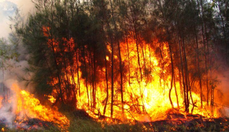 Siembra de aguacates y especulación inmobiliaria, tras incendios forestales
