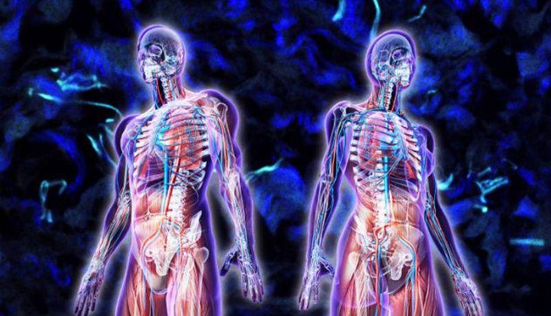 Descubren nuevo órgano en el cuerpo humano, lo llaman intersticio