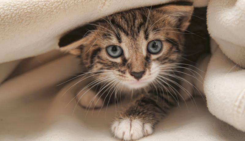 La Ciencia Confirma Que Ver Videos De Gatitos Es Bueno