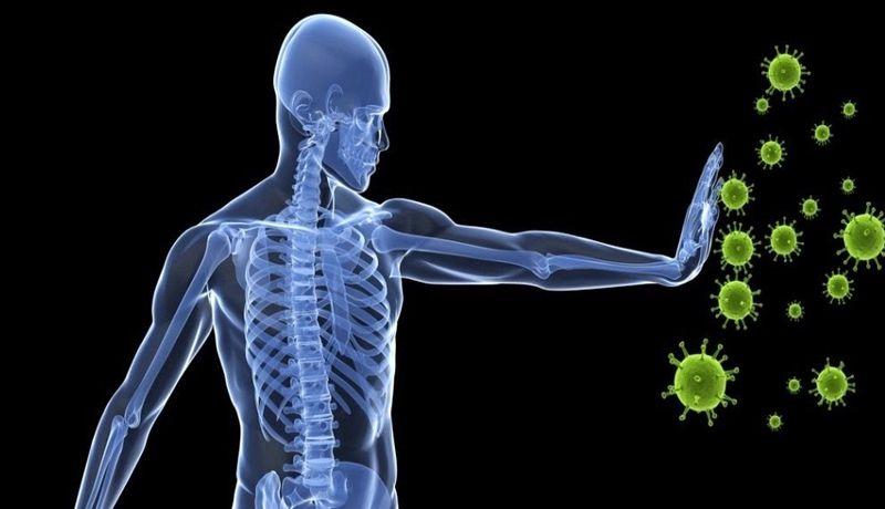Descubren nueva estructura anatómica dentro del sistema inmune